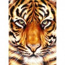 Сила тигра 30*40см